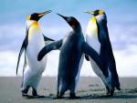 La Famille Mignone - Penguin (2 years)