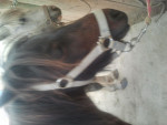 Nora - Pony (10 years)