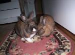 Caramal et Lana (Relaché) - Rabbit