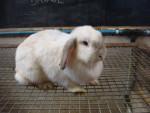 bunny - Rabbit
