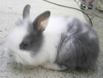 charly - Rabbit
